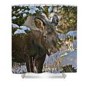 Frosty Nose Shower Curtain