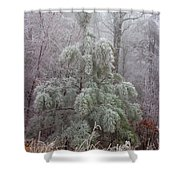 Frosty Pine Shower Curtain