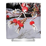 Frosty Rosehips Shower Curtain