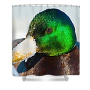 Mallard On Ice Shower Curtain