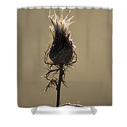Frosty Thorns Shower Curtain