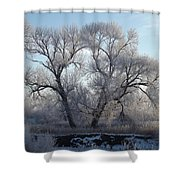 Frosty Trees 4 Shower Curtain