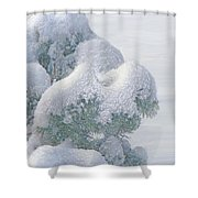 Frozen Beauty Shower Curtain