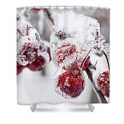 Frozen Crab Apples On Snowy Branch Shower Curtain