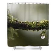 Frozen Droplet Shower Curtain