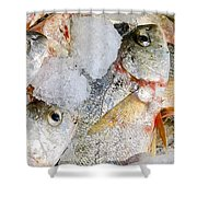 Frozen Fish On Ice Shower Curtain
