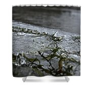 Frozen Milfoil Shower Curtain