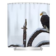 Frozen Perch Shower Curtain