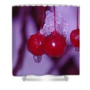 Frozen Red Berries Shower Curtain