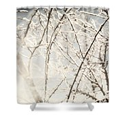 Frozen Tree Branches In Winter Shower Curtain