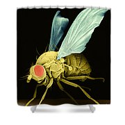 Fruit Fly Sem Shower Curtain