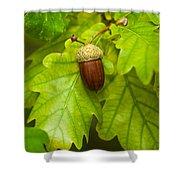 Fruit Of An Oak Tree Ripe In Autumn Shower Curtain