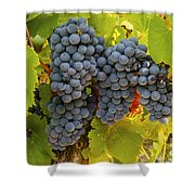 Fruit Of The Vine Imagine The Wine Shower Curtain