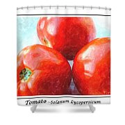 Fruit Of The Vine - Tomato - Vegetable Shower Curtain