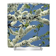 Fruit Tree Blooms Shower Curtain