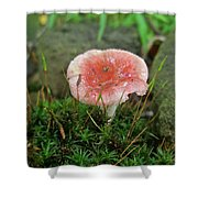 Fruiting Moss And Pink Mushroom Shower Curtain