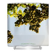 Fruits Of Nature Shower Curtain