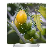 Fruits Of Our Labours Shower Curtain