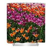Fruity Tulips Shower Curtain