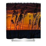Ft. Myers Sea Oats Shower Curtain