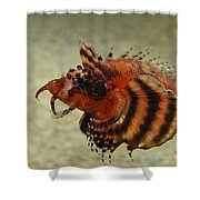 Fu Manchu Lionfish Shower Curtain