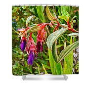Fuchsia Along The Trail To Huayna Picchu-peru Shower Curtain