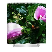 Fuchsia Flowers Laced In Droplets Shower Curtain