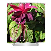 Fuchsia Named Roesse Blacky Shower Curtain