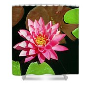 Fuchsia Pink Water Lilly Flower Floating In Pond Shower Curtain