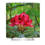 Fuchsia Rhododendron Moore State Park Shower Curtain