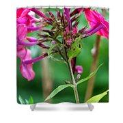 Fucia  Tubular Flowers Shower Curtain