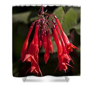 Fucshia Red Flower Shower Curtain