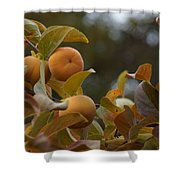 Fuju Persimmons In The Tree Shower Curtain