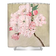 Fukurokuju - God Of Longevity - Vintage Watercolor Shower Curtain