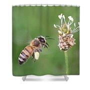 Full Basket Of Plantain Pollen Shower Curtain