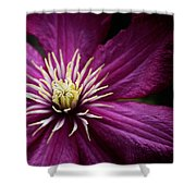Full Bloom Clematis  Shower Curtain