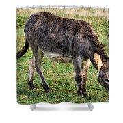 Full Grown Donkey Grazing Shower Curtain