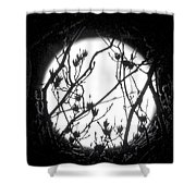 Full Moon And Poplar Branches Shower Curtain
