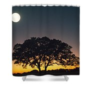 Full Moon Over Silhouetted Tree Shower Curtain