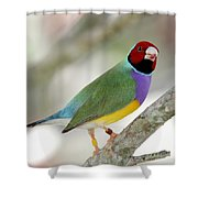 Full Of Color Shower Curtain