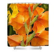 Full Stem Gladiolus Shower Curtain
