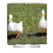 Fun Ducks Shower Curtain