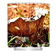 Fun Fungus Shower Curtain