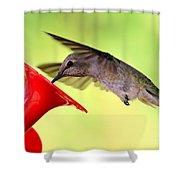 Fun Summer Hummingbird Shower Curtain