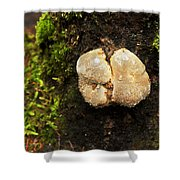Funghi Shower Curtain