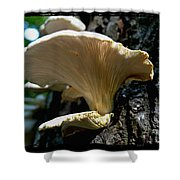 Fungi Shower Curtain