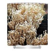 Fungus 10 Shower Curtain