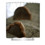Fungus 12 Shower Curtain