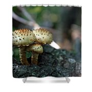 Fungus 8 Shower Curtain