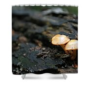 Fungus 9 Shower Curtain